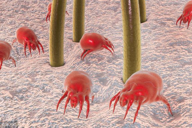 皮肤螨虫检测仪检测皮肤隐形杀手:螨虫